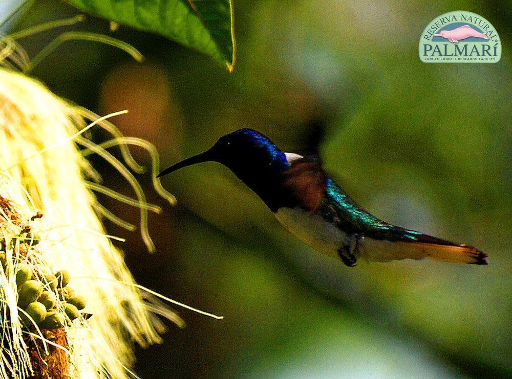 Reserva-Natural-Palmari-Fauna-035