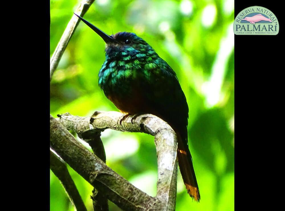 Reserva-Natural-Palmari-Fauna-039