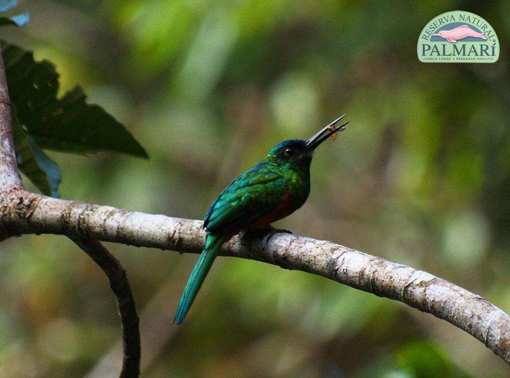 Reserva-Natural-Palmari-Fauna-041