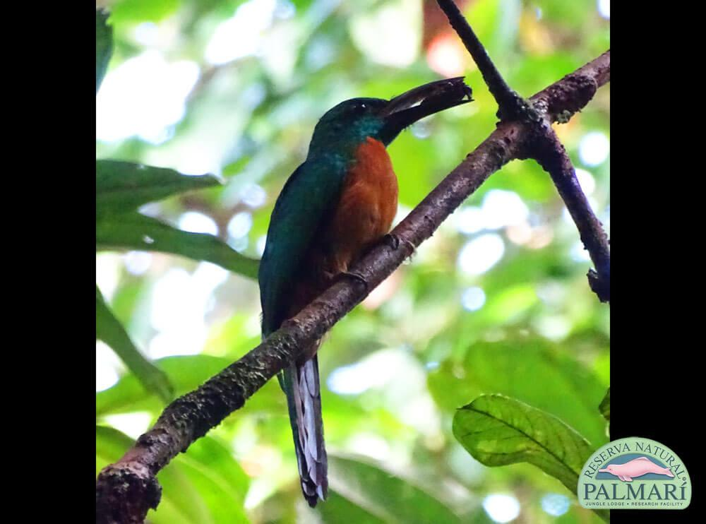 Reserva-Natural-Palmari-Fauna-045