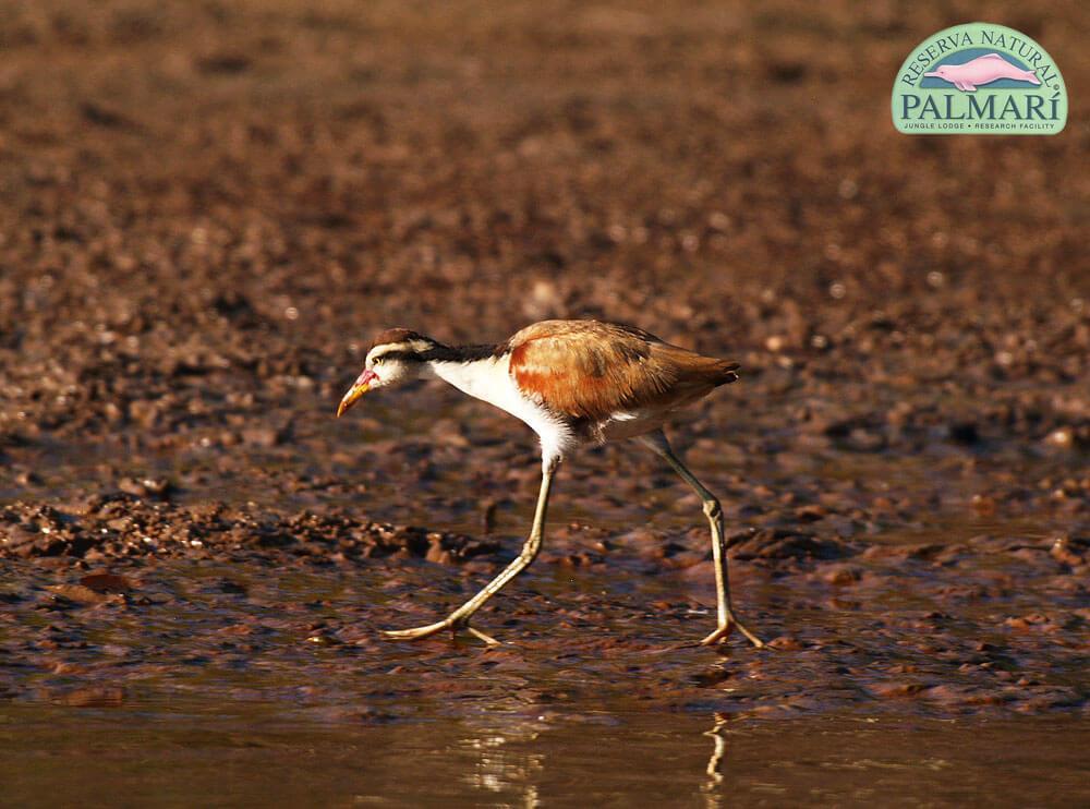 Reserva-Natural-Palmari-Fauna-046