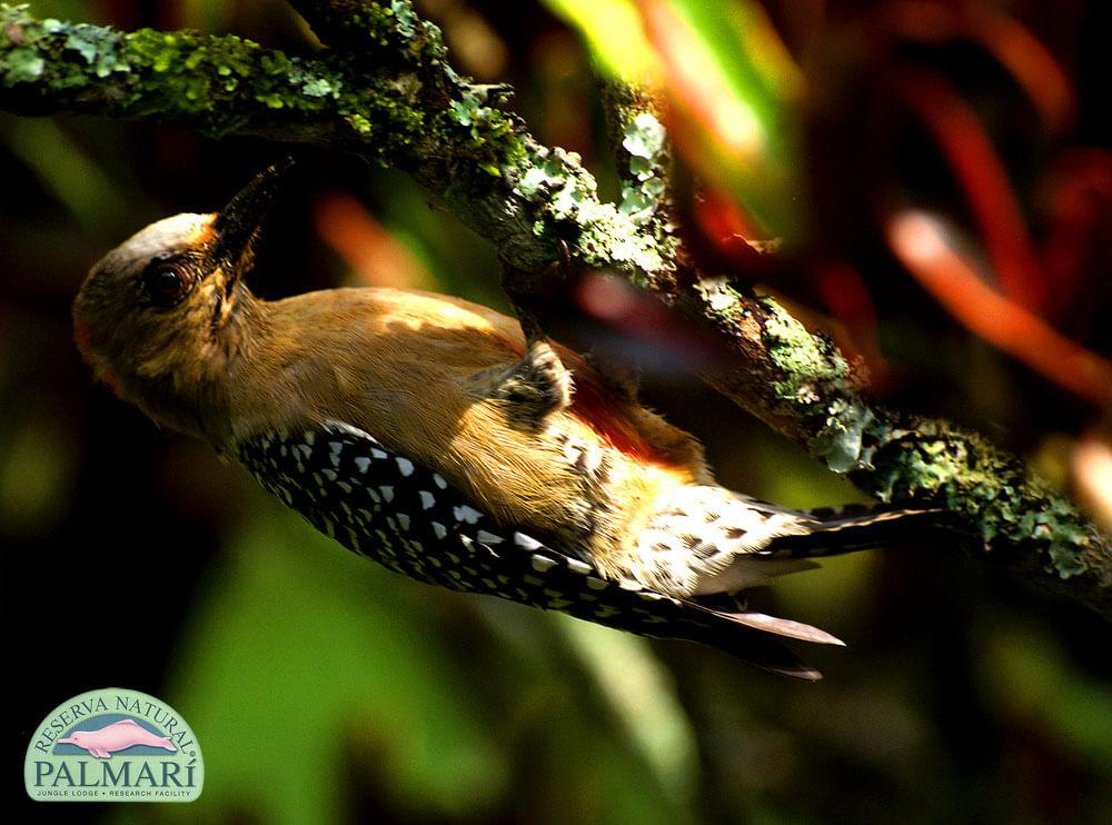 Reserva-Natural-Palmari-Fauna-051