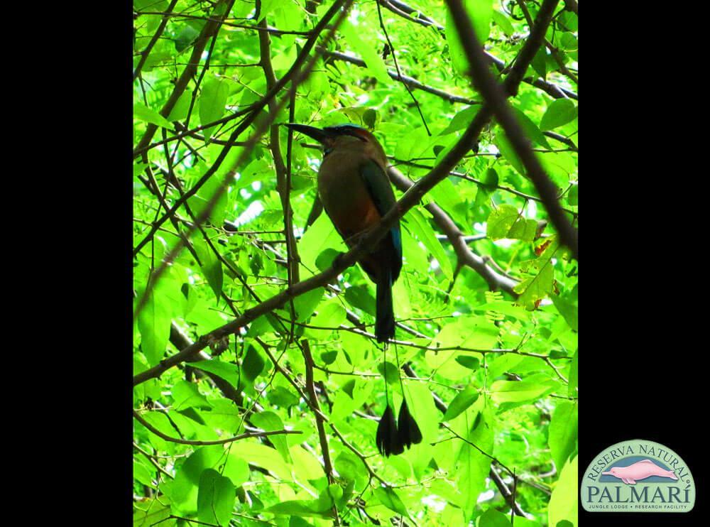 Reserva-Natural-Palmari-Fauna-054