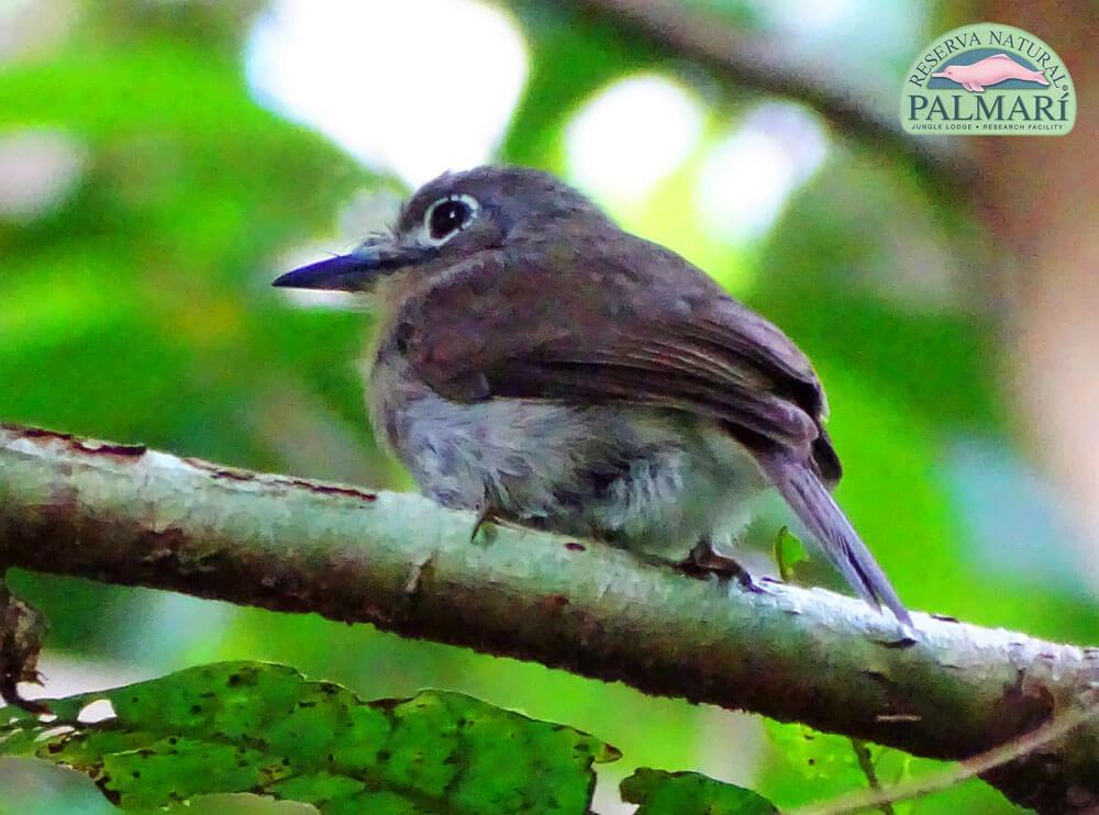 Reserva-Natural-Palmari-Fauna-056