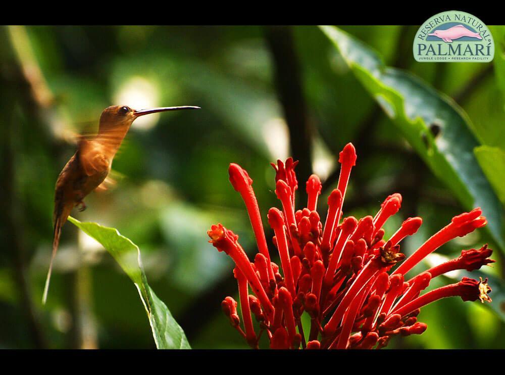 Reserva-Natural-Palmari-Fauna-059