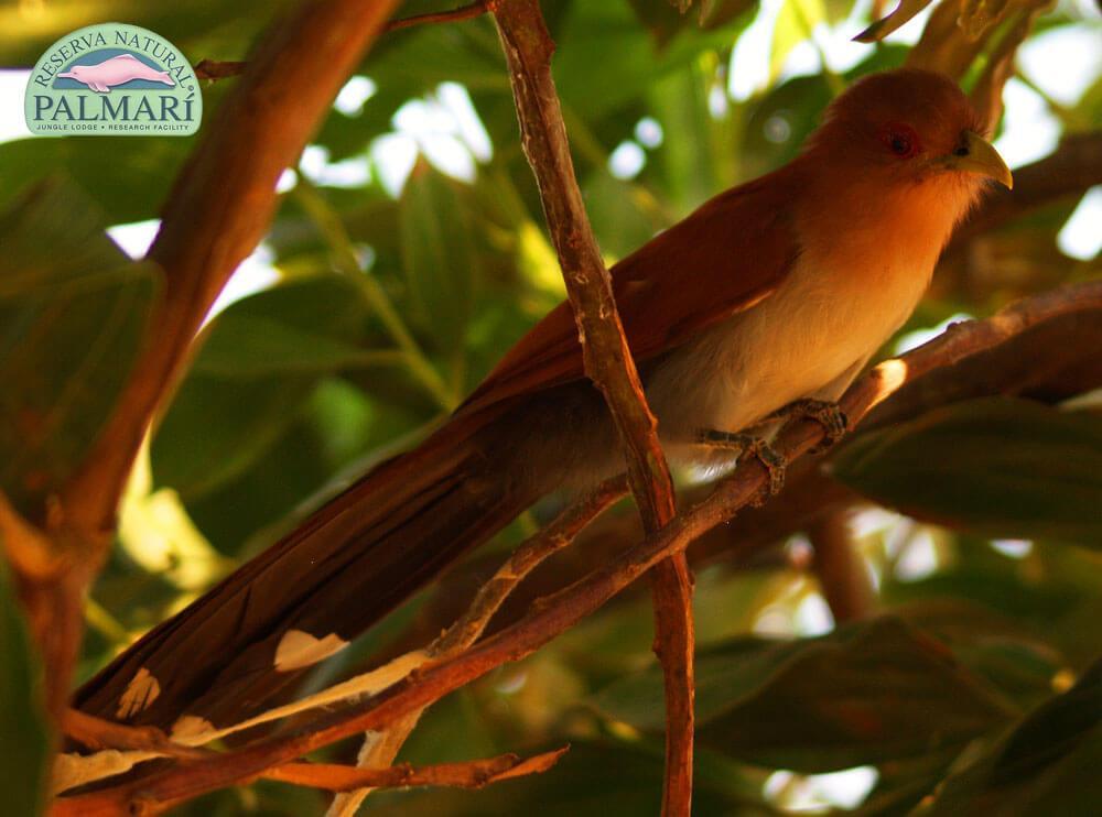 Reserva-Natural-Palmari-Fauna-062