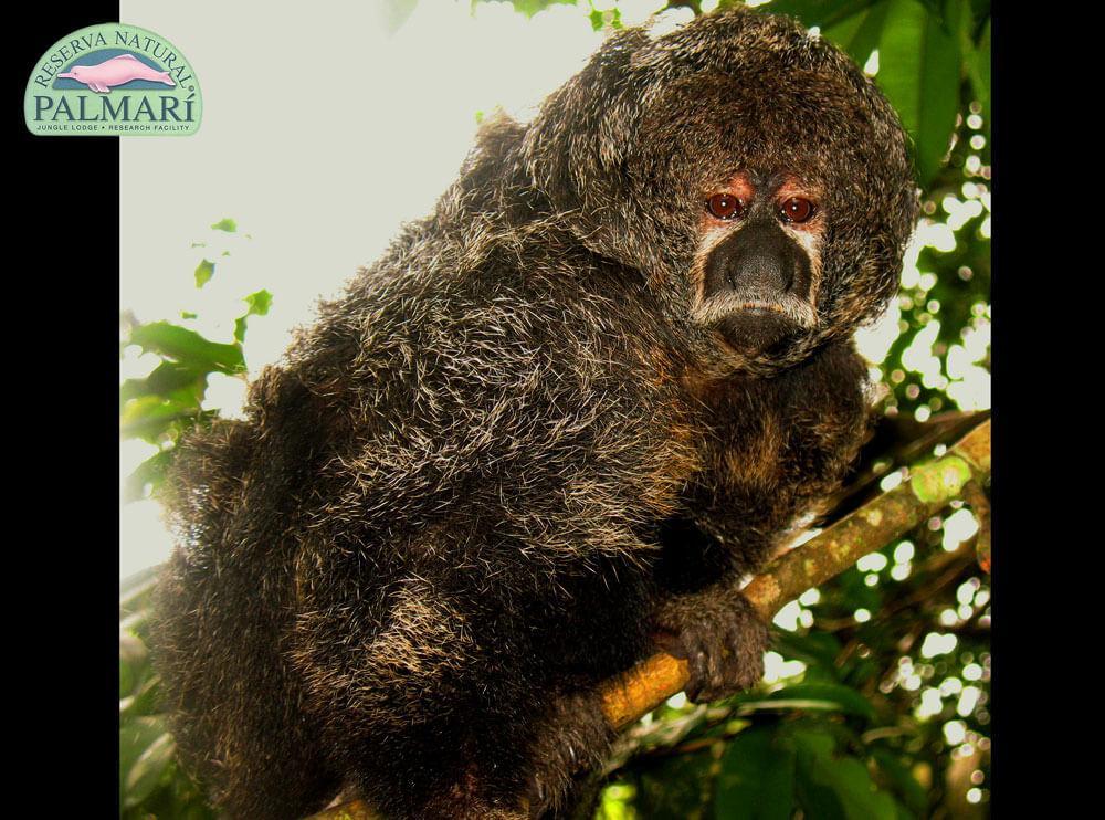 Reserva-Natural-Palmari-Fauna-063