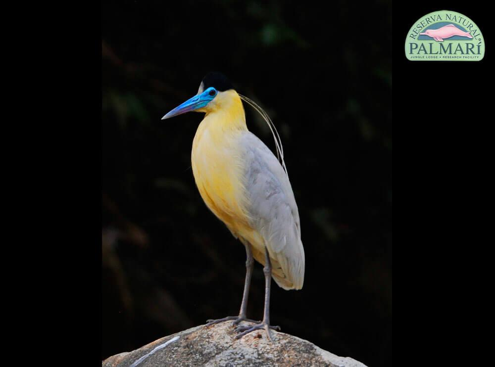Reserva-Natural-Palmari-Fauna-064