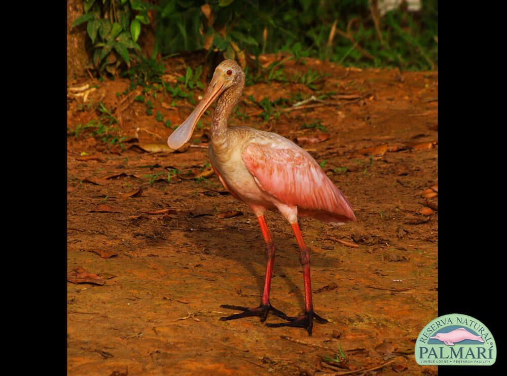Reserva-Natural-Palmari-Fauna-065