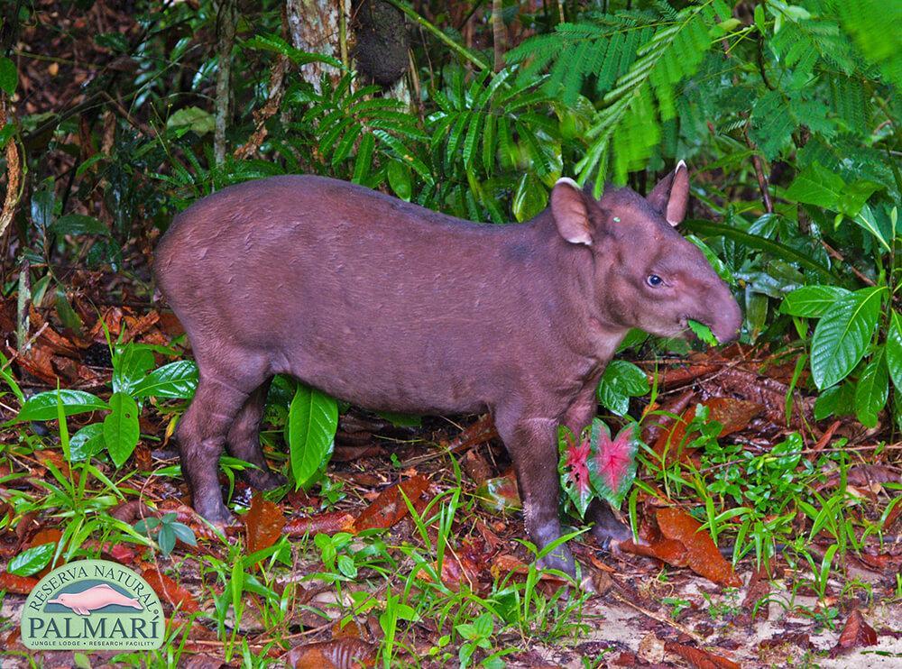 Reserva-Natural-Palmari-Fauna-069