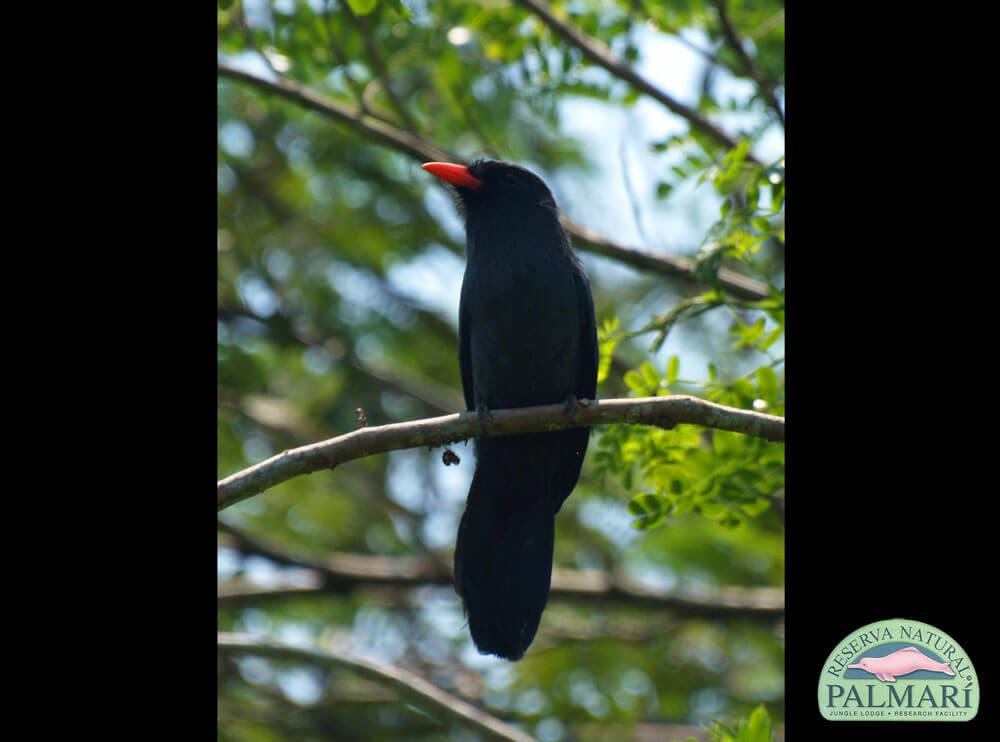 Reserva-Natural-Palmari-Fauna-070