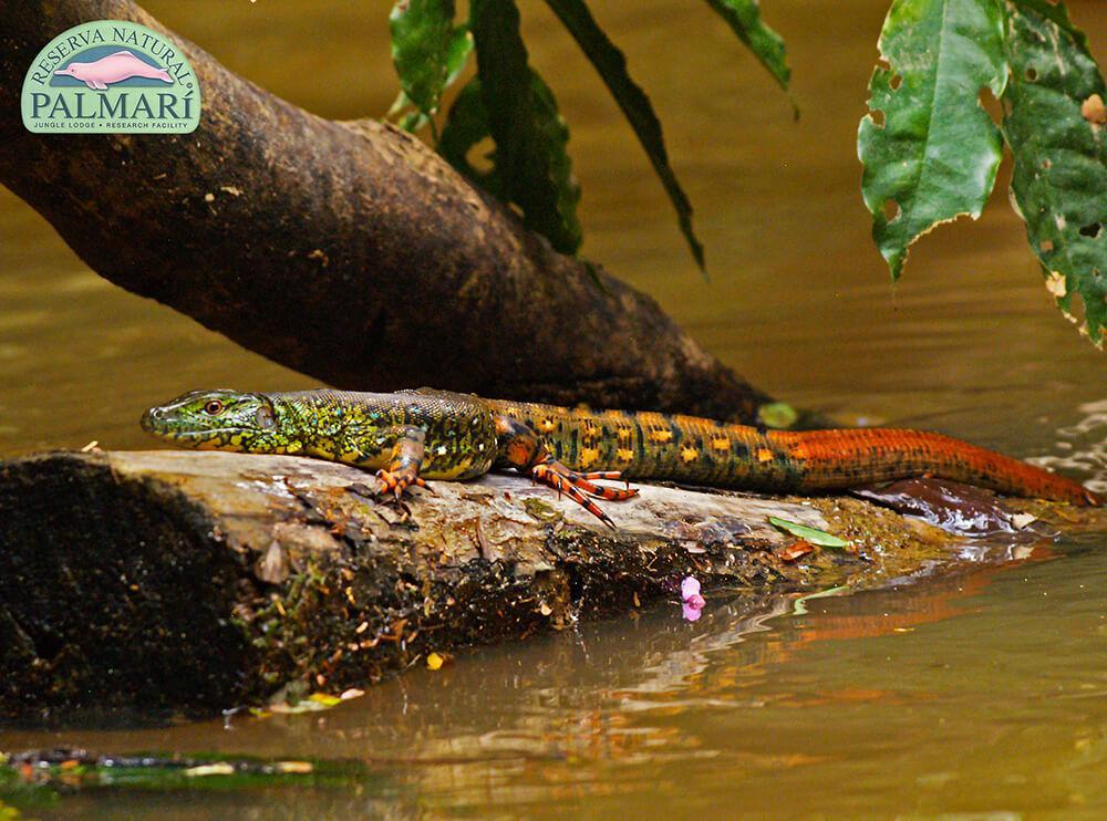 Reserva-Natural-Palmari-Fauna-071