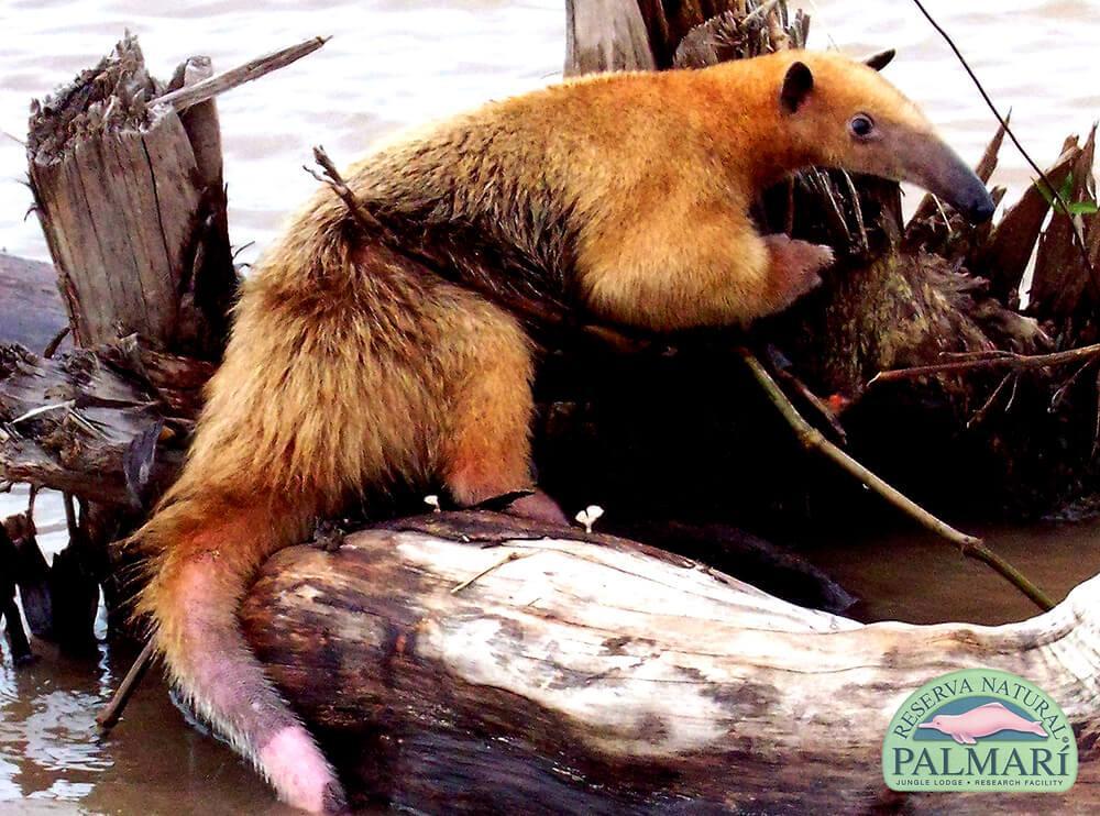 Reserva-Natural-Palmari-Fauna-073