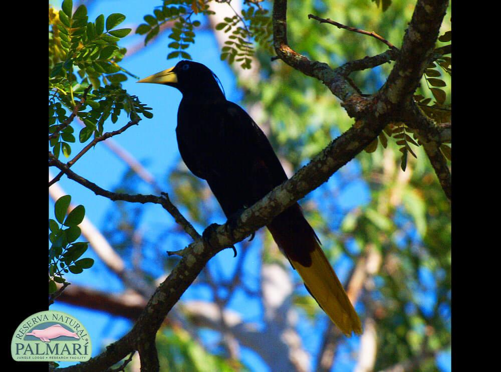 Reserva-Natural-Palmari-Fauna-074