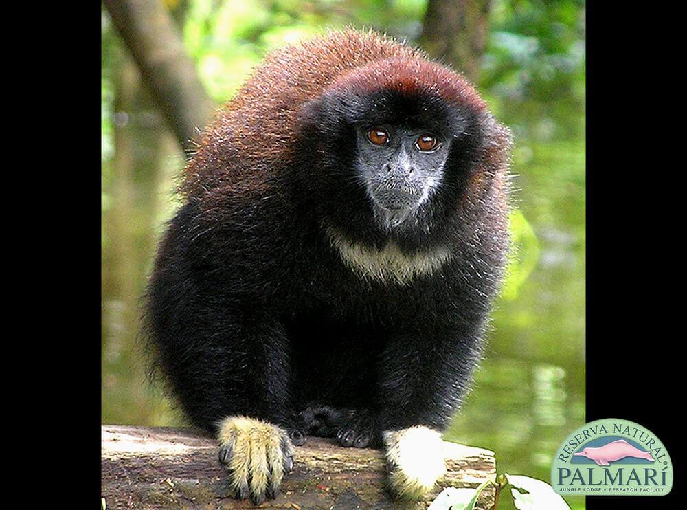 Reserva-Natural-Palmari-Fauna-075