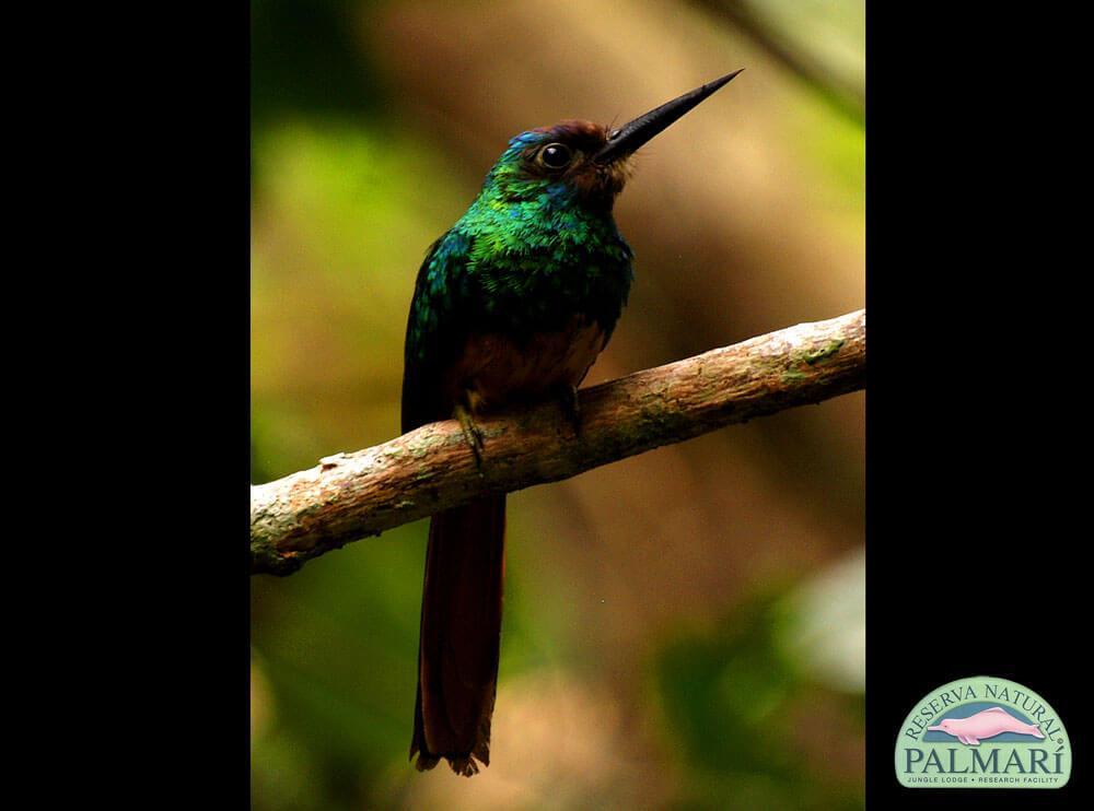 Reserva-Natural-Palmari-Fauna-077