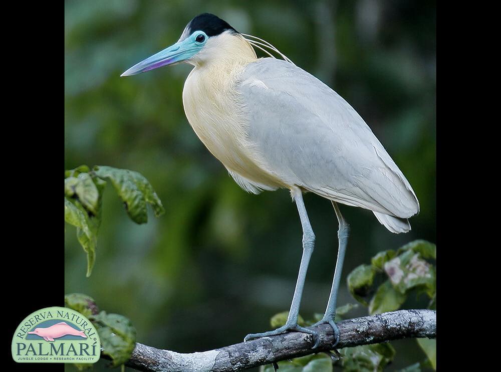 Reserva-Natural-Palmari-Fauna-078