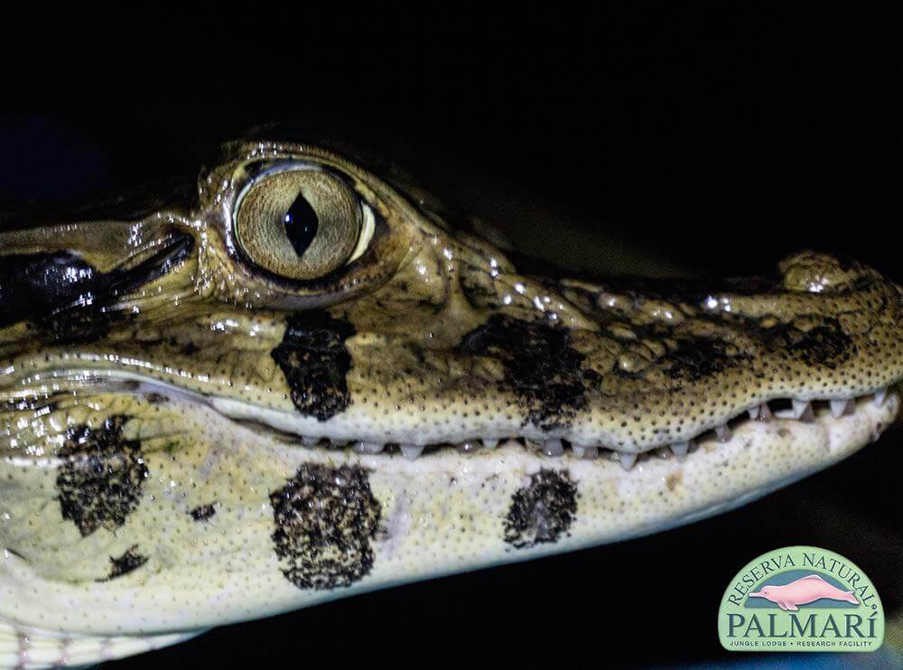 Reserva-Natural-Palmari-Fauna-080