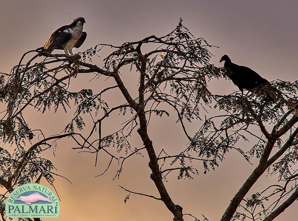 Reserva-Natural-Palmari-Fauna-085
