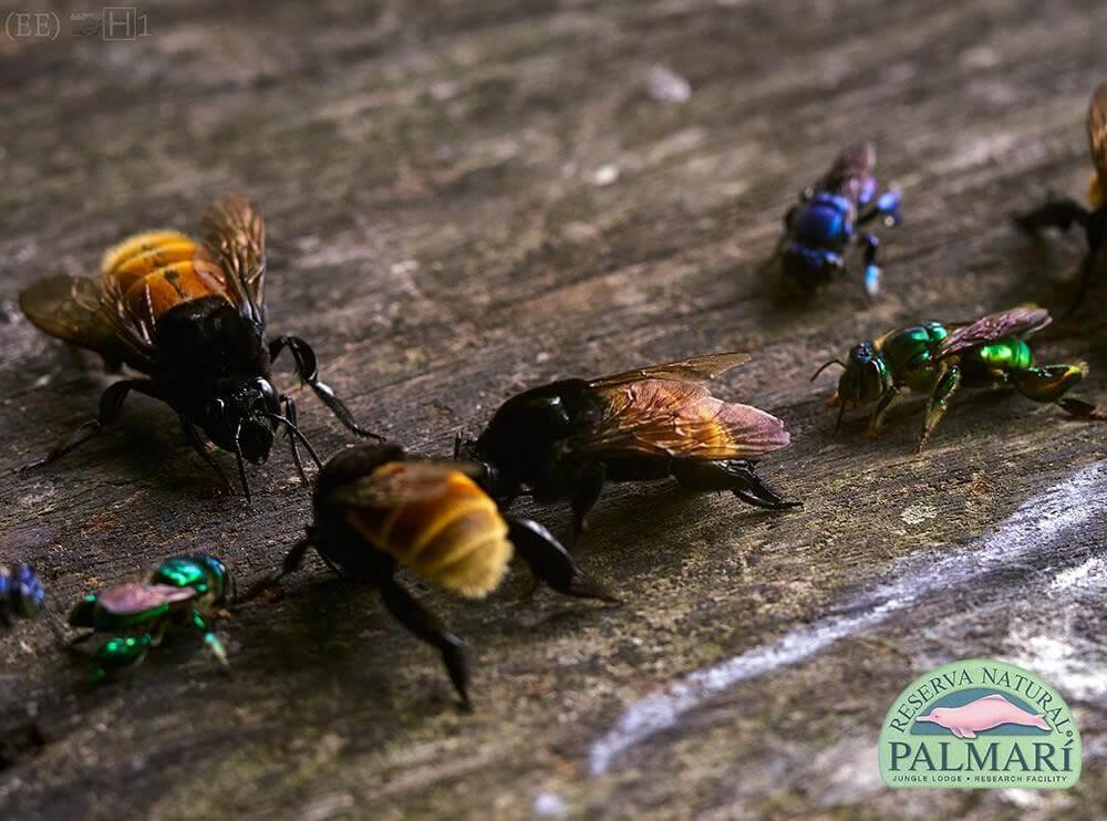 Reserva-Natural-Palmari-Fauna-086