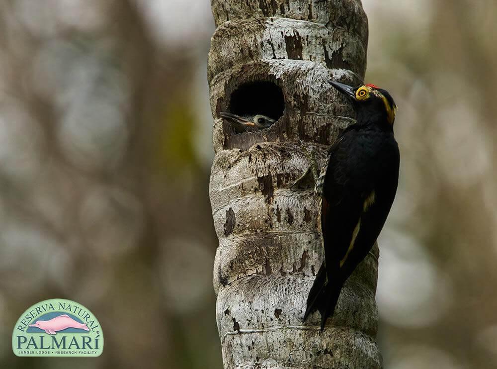Reserva-Natural-Palmari-Fauna-087