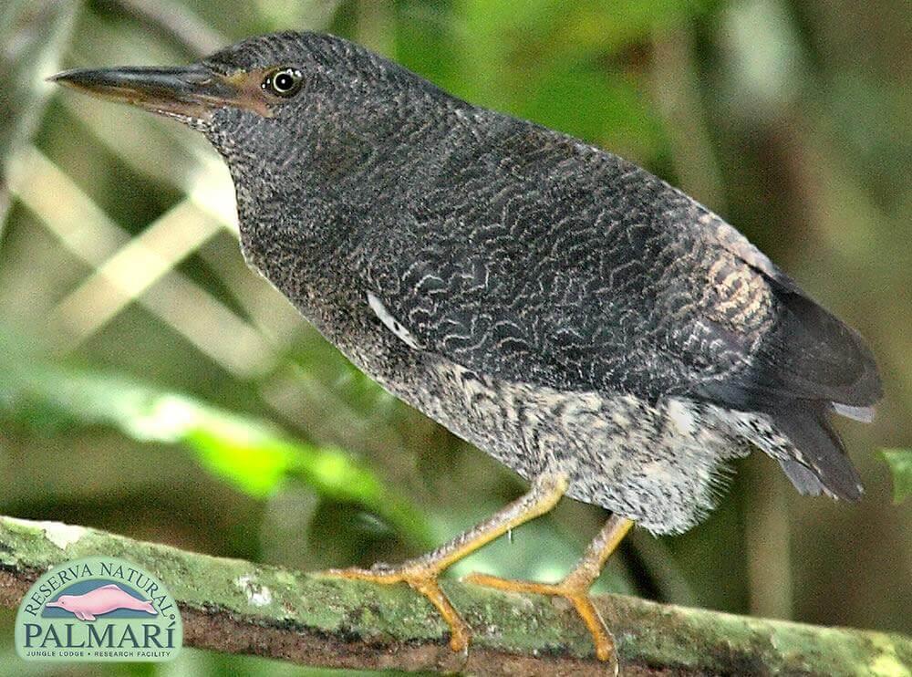 Reserva-Natural-Palmari-Fauna-088