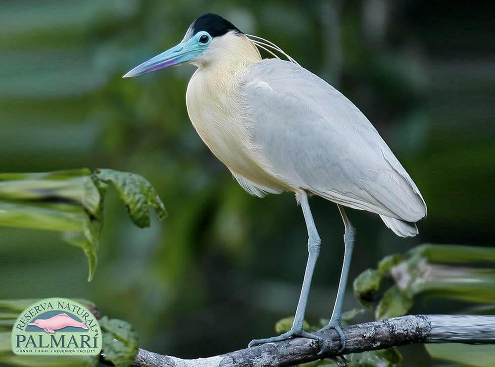 Reserva-Natural-Palmari-Fauna-090