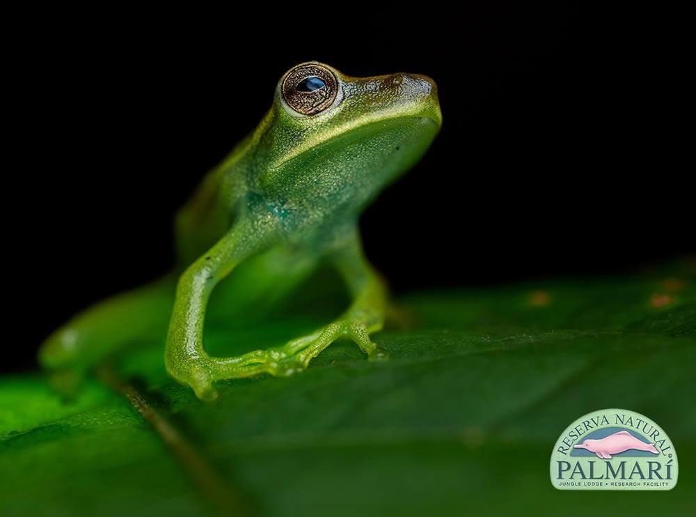 Reserva-Natural-Palmari-Fauna-091