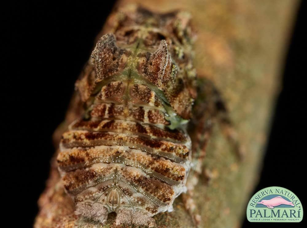 Reserva-Natural-Palmari-Fauna-094