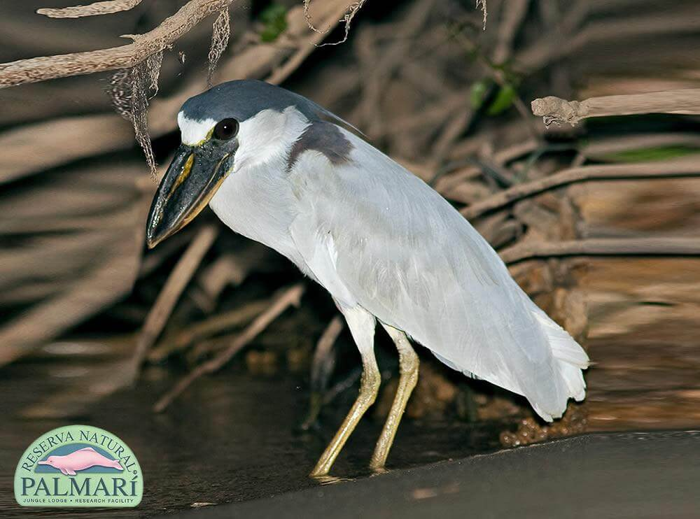 Reserva-Natural-Palmari-Fauna-095