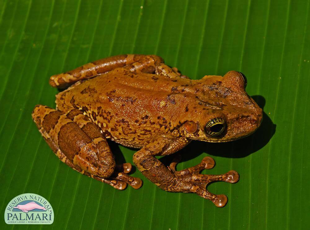 Reserva-Natural-Palmari-Fauna-096