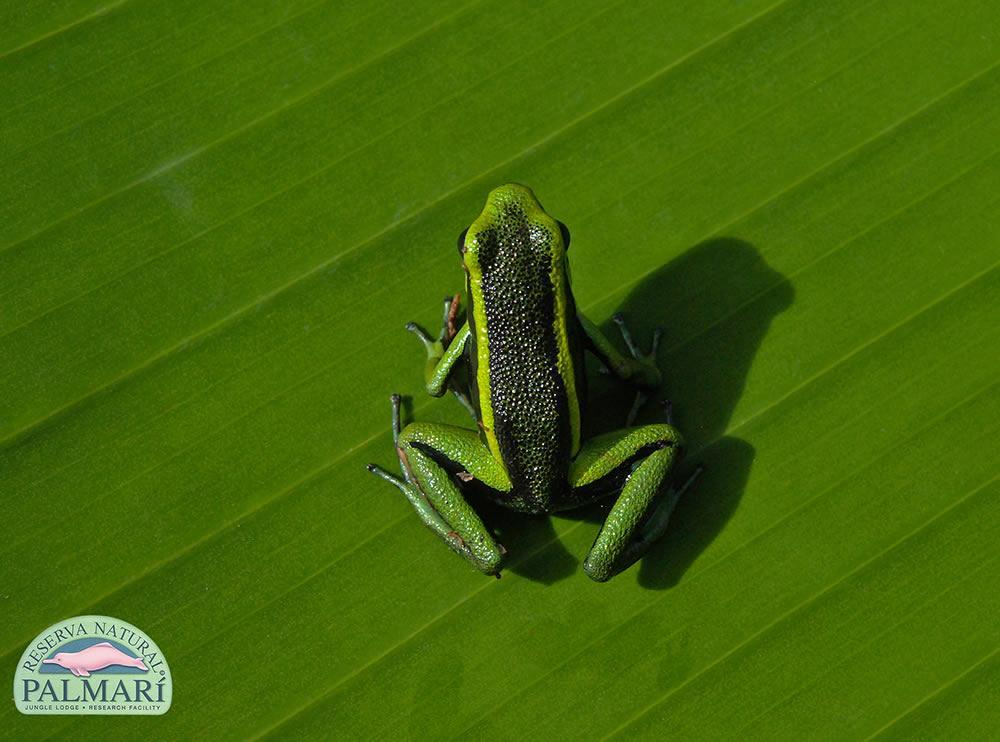 Reserva-Natural-Palmari-Fauna-098