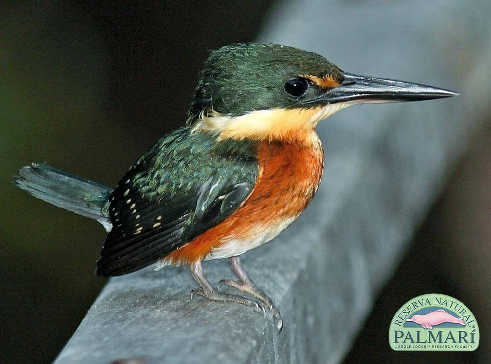 Reserva-Natural-Palmari-Fauna-101