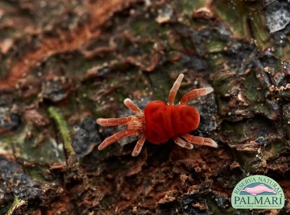Reserva-Natural-Palmari-Fauna-102