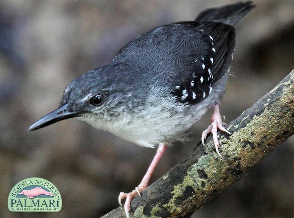 Reserva-Natural-Palmari-Fauna-104