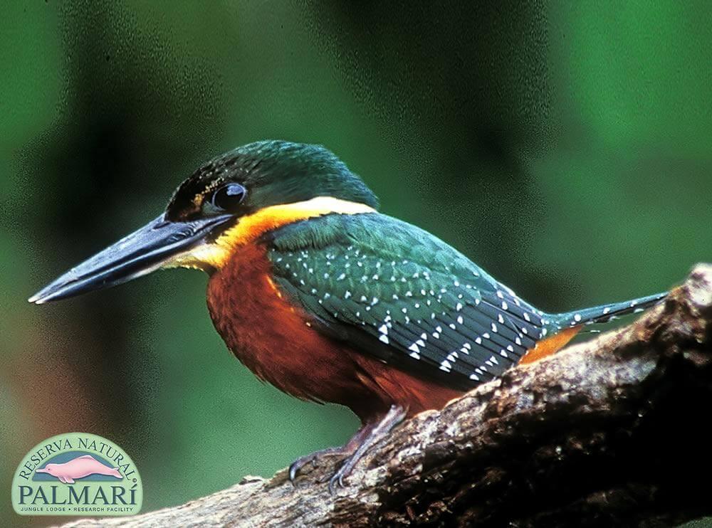 Reserva-Natural-Palmari-Fauna-105