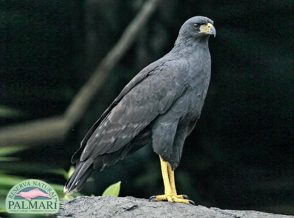 Reserva-Natural-Palmari-Fauna-109