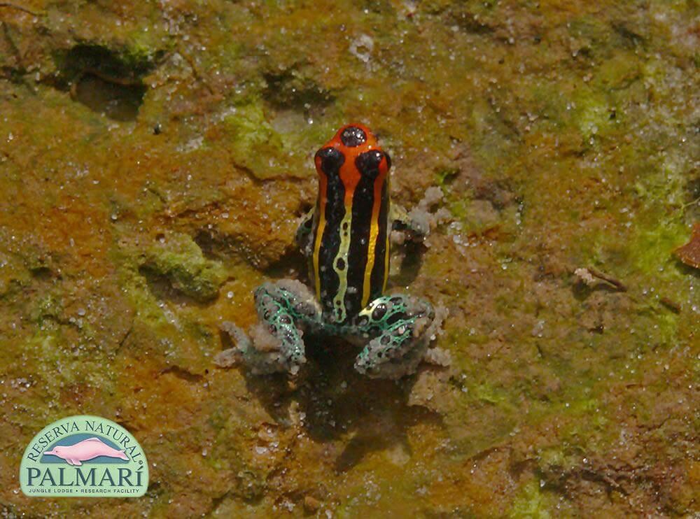 Reserva-Natural-Palmari-Fauna-113