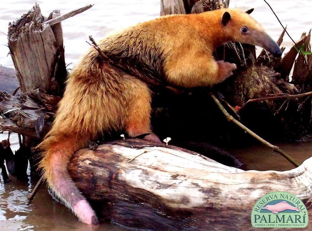 Reserva-Natural-Palmari-Fauna-114