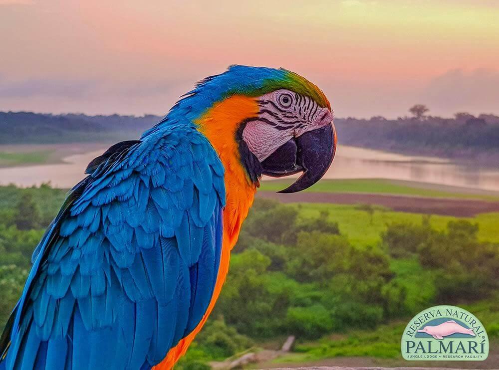 Reserva-Natural-Palmari-Fauna-117