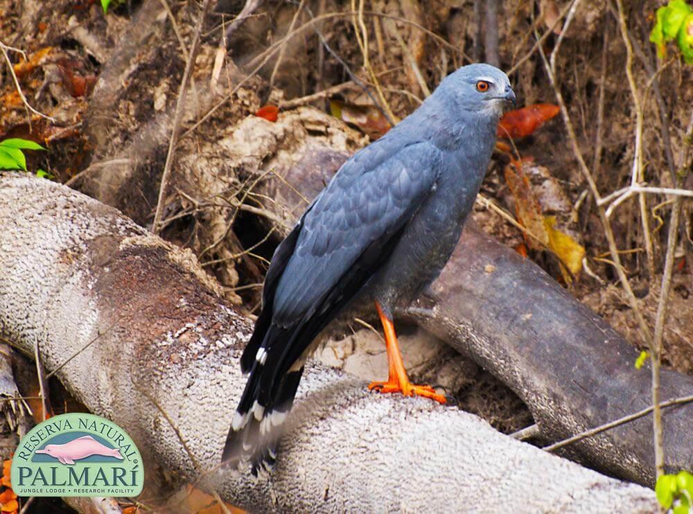 Reserva-Natural-Palmari-Fauna-118