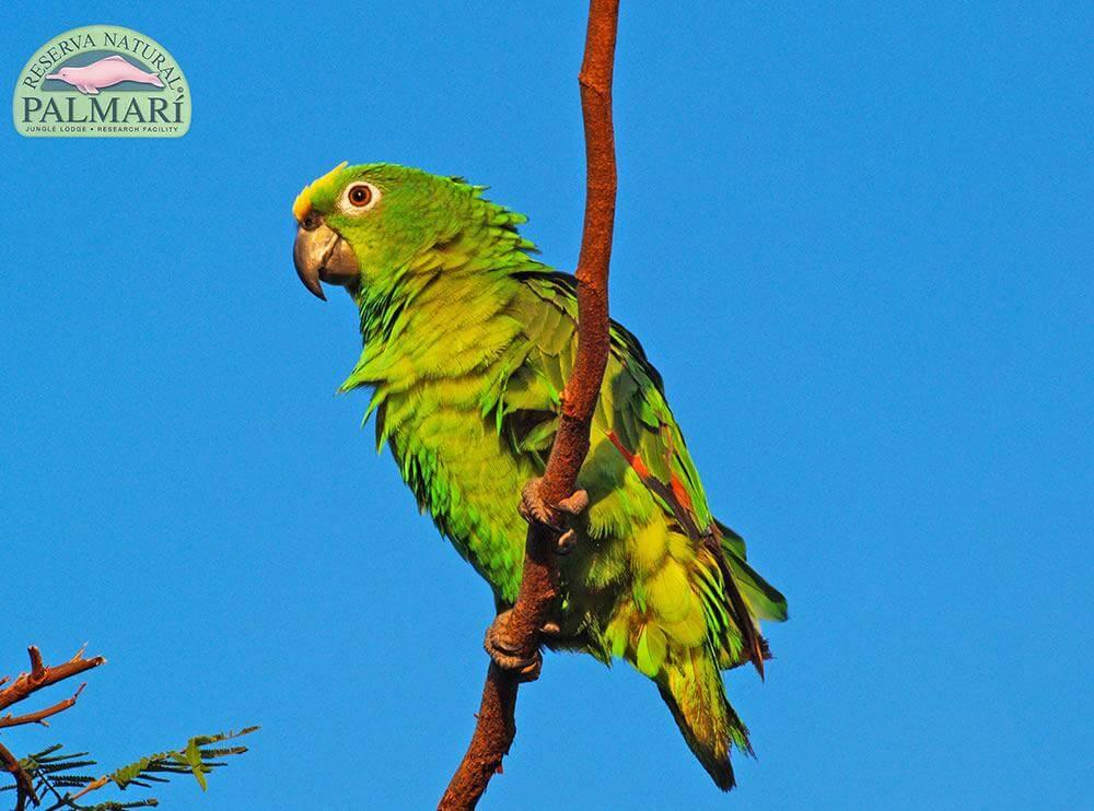 Reserva-Natural-Palmari-Fauna-119
