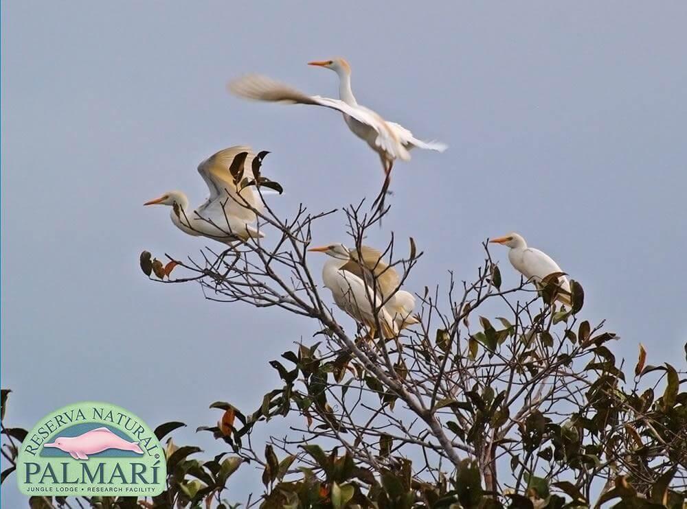 Reserva-Natural-Palmari-Fauna-120