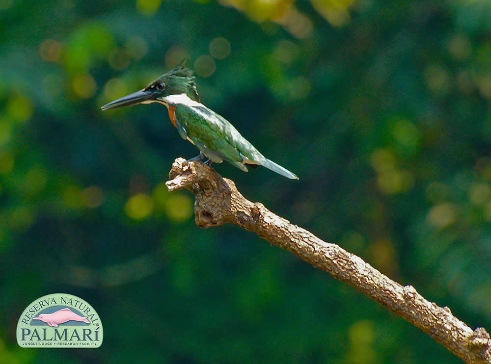 Reserva-Natural-Palmari-Fauna-121
