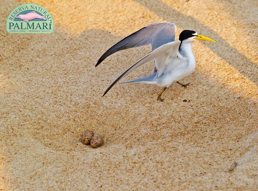 Reserva-Natural-Palmari-Fauna-123