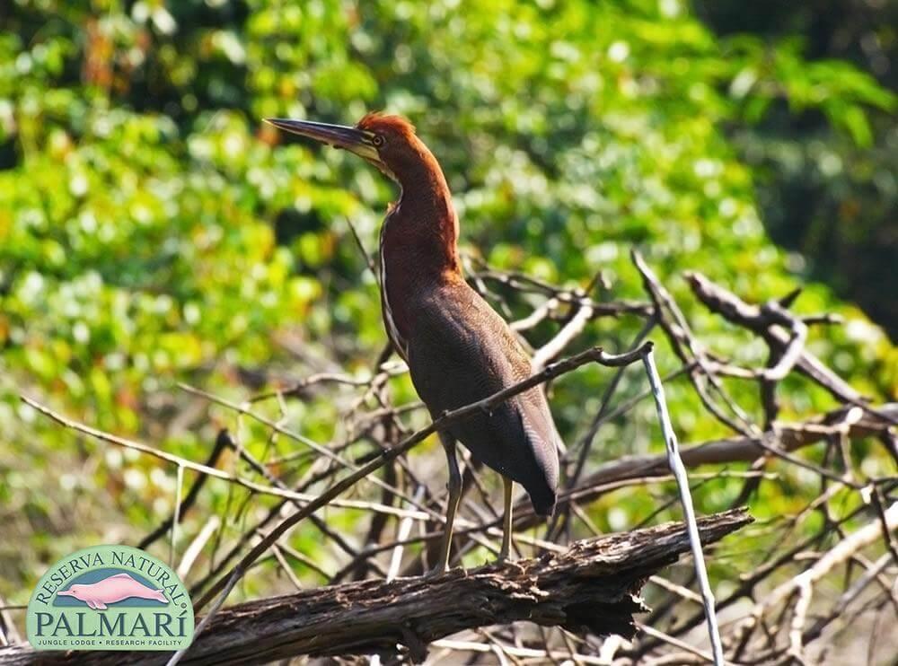 Reserva-Natural-Palmari-Fauna-124