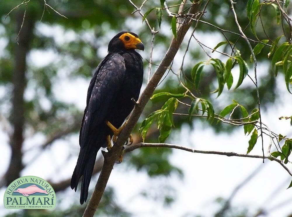 Reserva-Natural-Palmari-Fauna-125