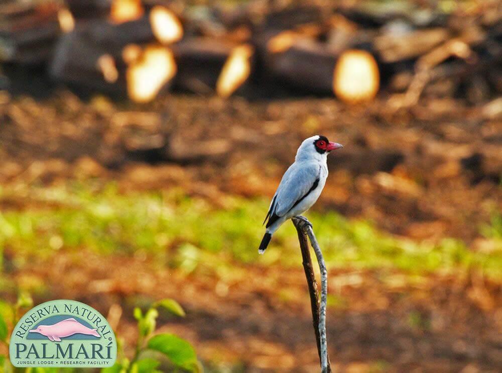 Reserva-Natural-Palmari-Fauna-127