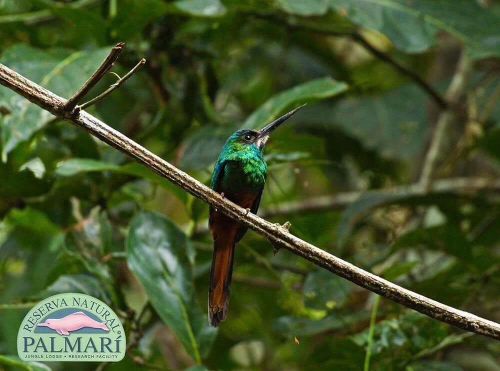 Reserva-Natural-Palmari-Fauna-128