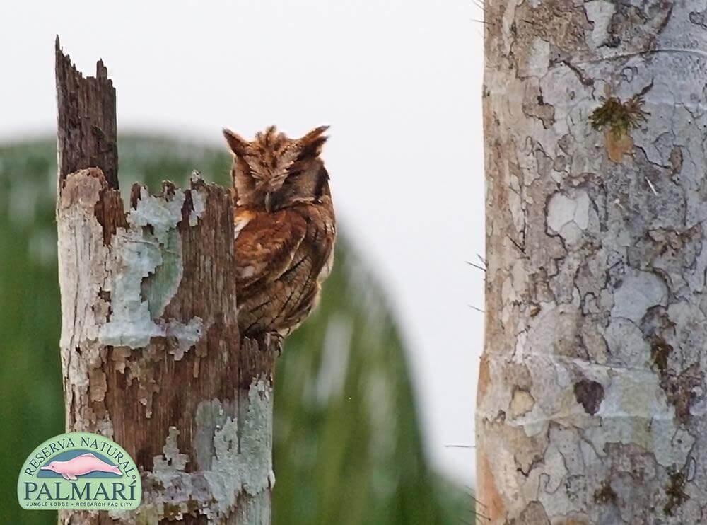 Reserva-Natural-Palmari-Fauna-129